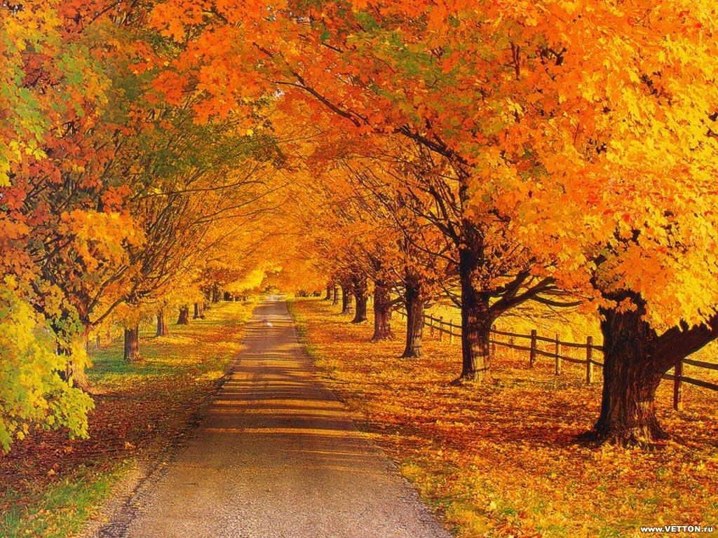 красивая картинка про осень